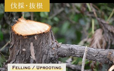 東近江市の造園・外構工事・留守宅管理なら花久造園へ 伐採・抜根